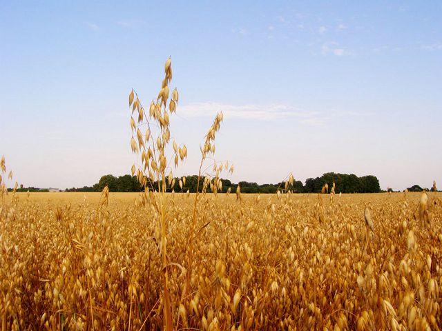 Сельскохозяйственные земли