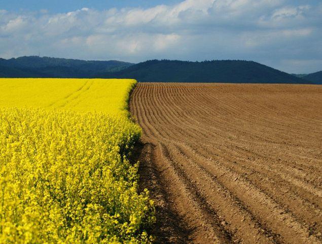 Охрана и рациональное использование земель